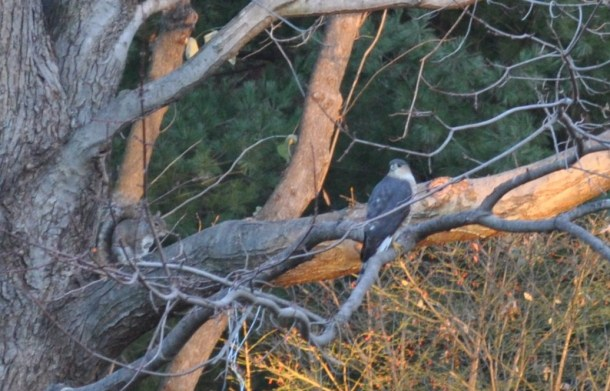 fall csa week 5 2012 and hawk 053