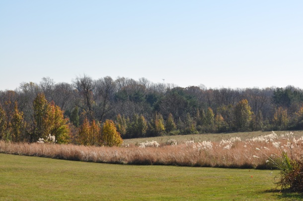 autumn in the meadow milkweed 091