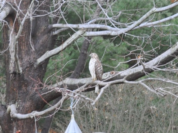 decorations and hawk 002