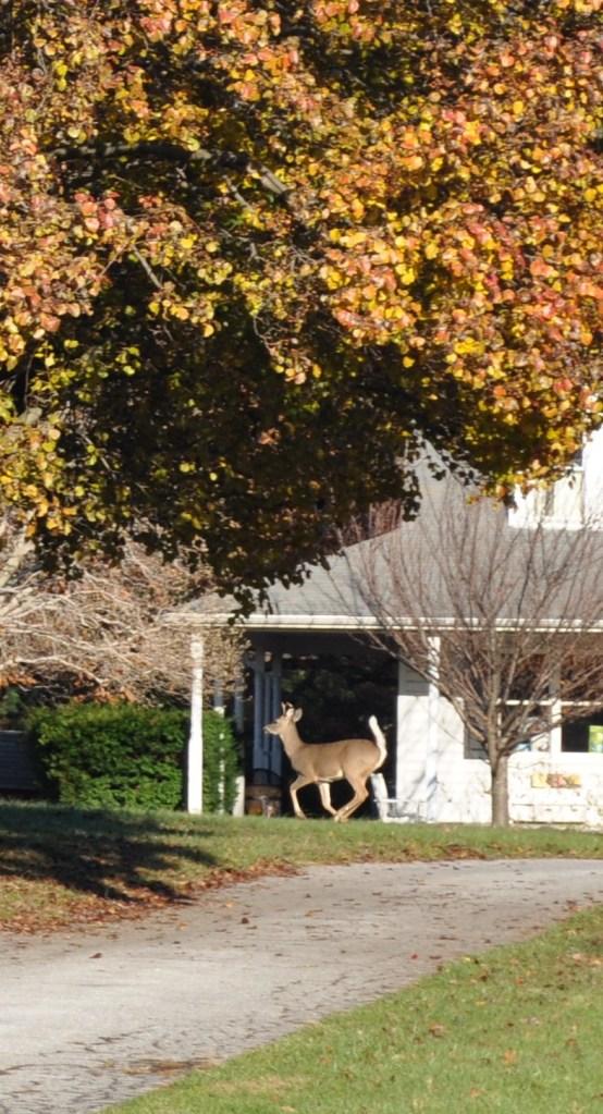 fall plus csa week 3 2012 027