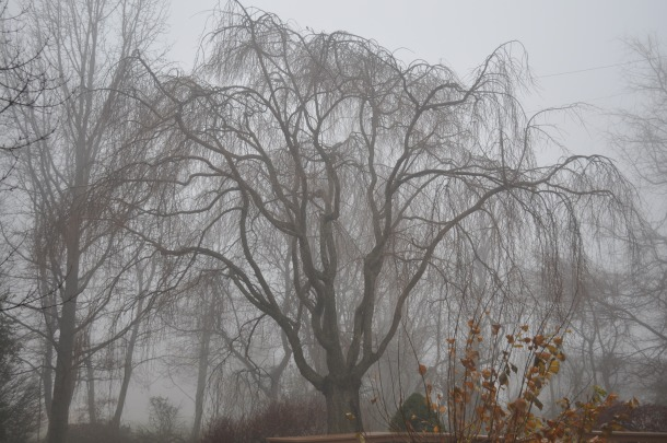foggy sunday morning 017