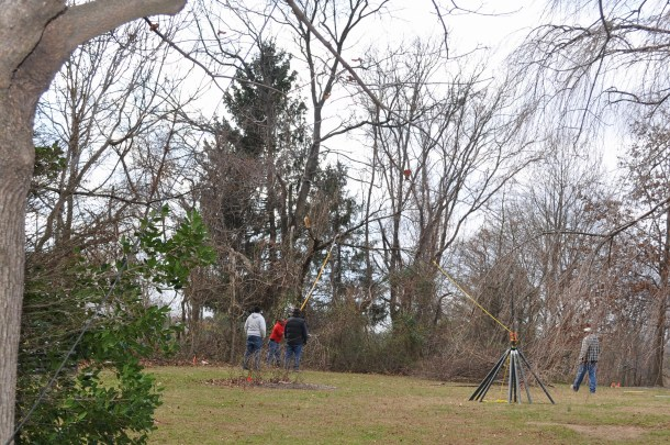 tree maintenance 017
