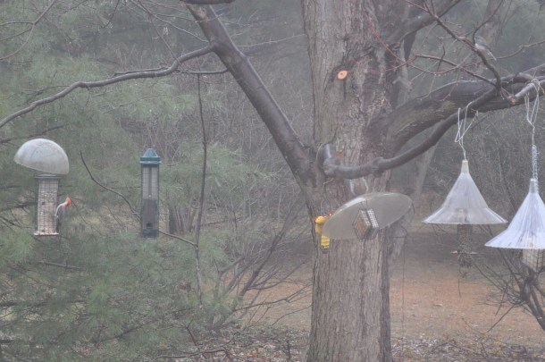 breakfast and birds at new feeder 020