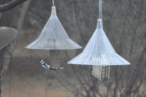 breakfast and birds at new feeder 065