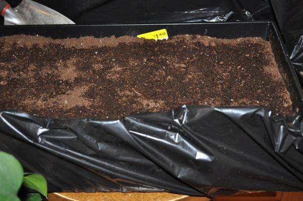 brisket and plantings 033
