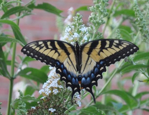 butterflies 104