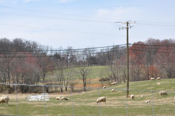 eat local venison loin, clarks elioak and spring pics 216