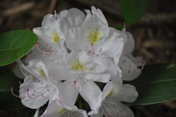 gelnwood market spring flowers and bunnies 159