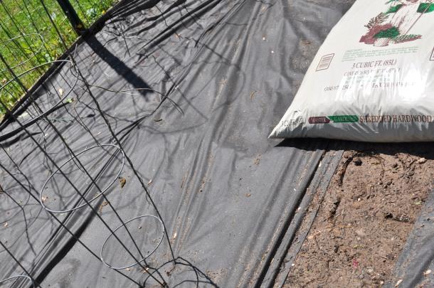 tilling the garden 001