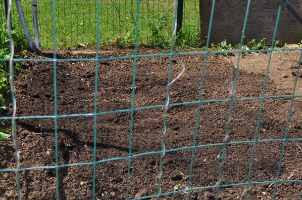 tilling the garden 005