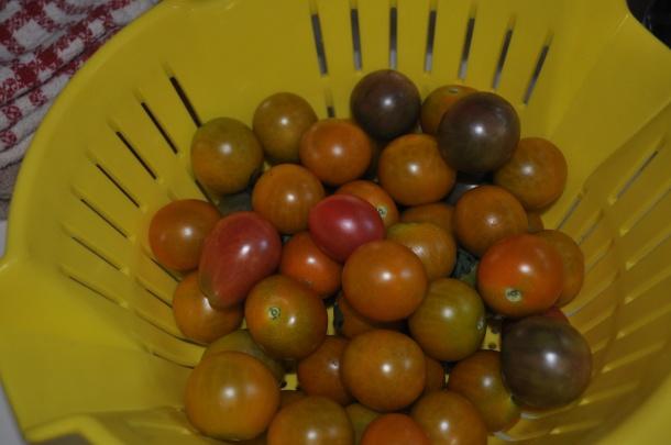 csa farm visit and fava beans 019