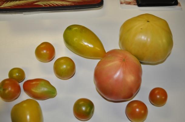 tomato harvest ratatouille pie 007
