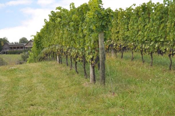 Fall wine trip 170