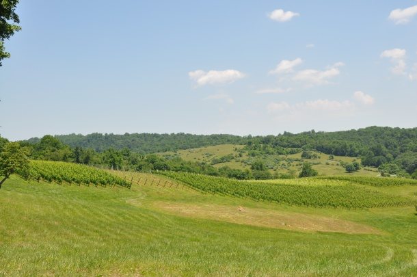 linden vineyards 026