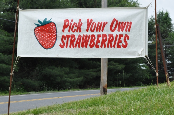 strawberries 004