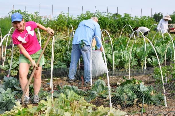 food bank volunteers and gardens 011