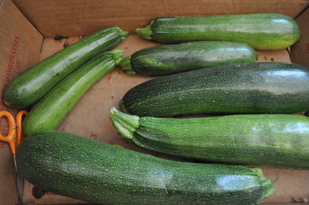 garden and dinner zucchini 008