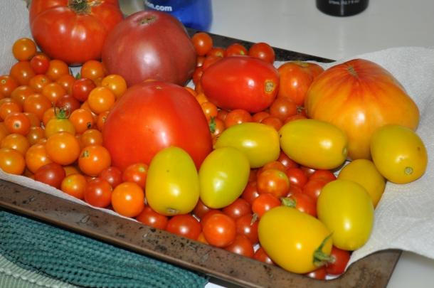 garden stuff 038
