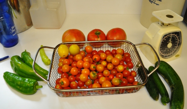 harvest starting 001