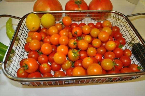 harvest starting 004