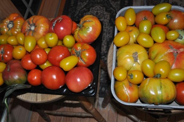 garden processing 034