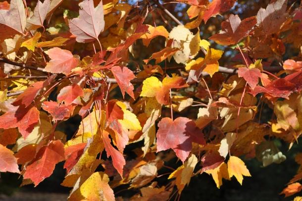 big wines and fall foliage 071