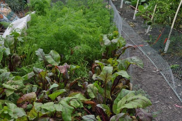 food bank gardens 002
