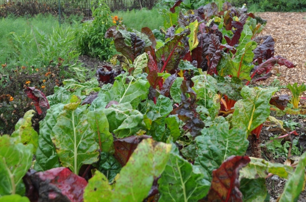 food bank gardens 028