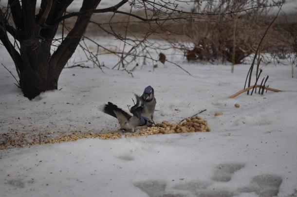 Hawk January 2011 025