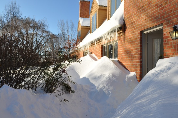 winter 2010 245