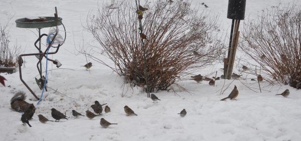 birds and snow and cooking 025
