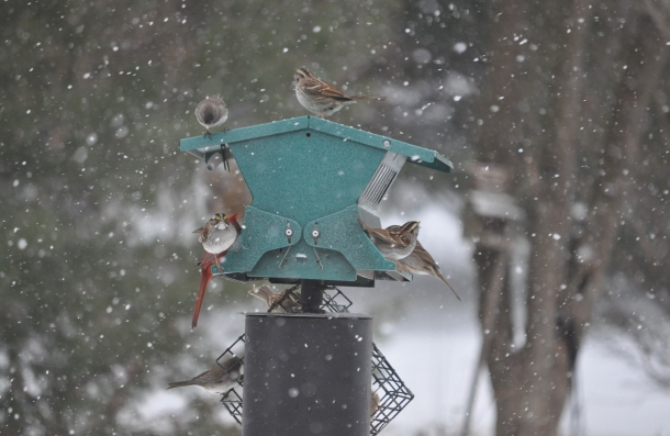 birds and snow and cooking 040