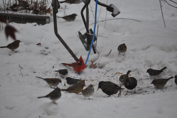 birds and snow and cooking 041