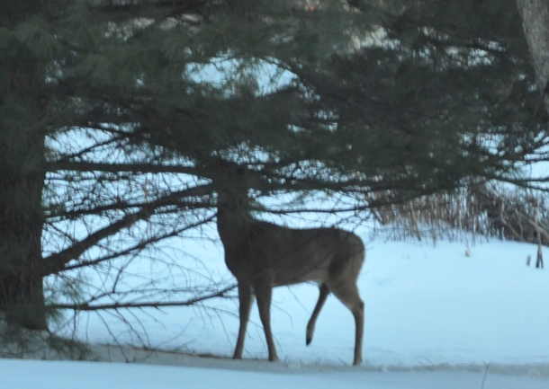 snow. deer and cooking 033
