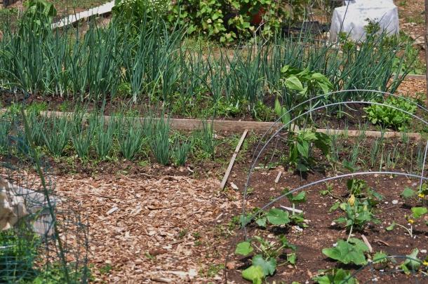 csa may 19 bioblitz hundred sq garden 041