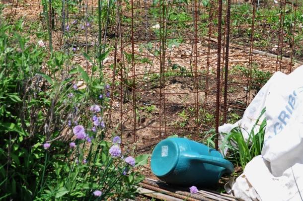 csa may 19 bioblitz hundred sq garden 055