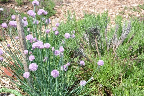 csa may 19 bioblitz hundred sq garden 057