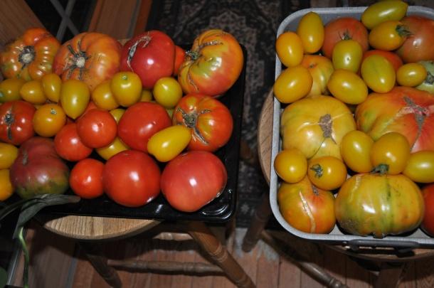 garden processing 033