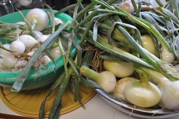 garden and eggs 004