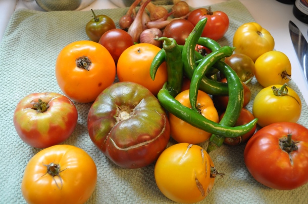 tomato harvest and glen manor 003