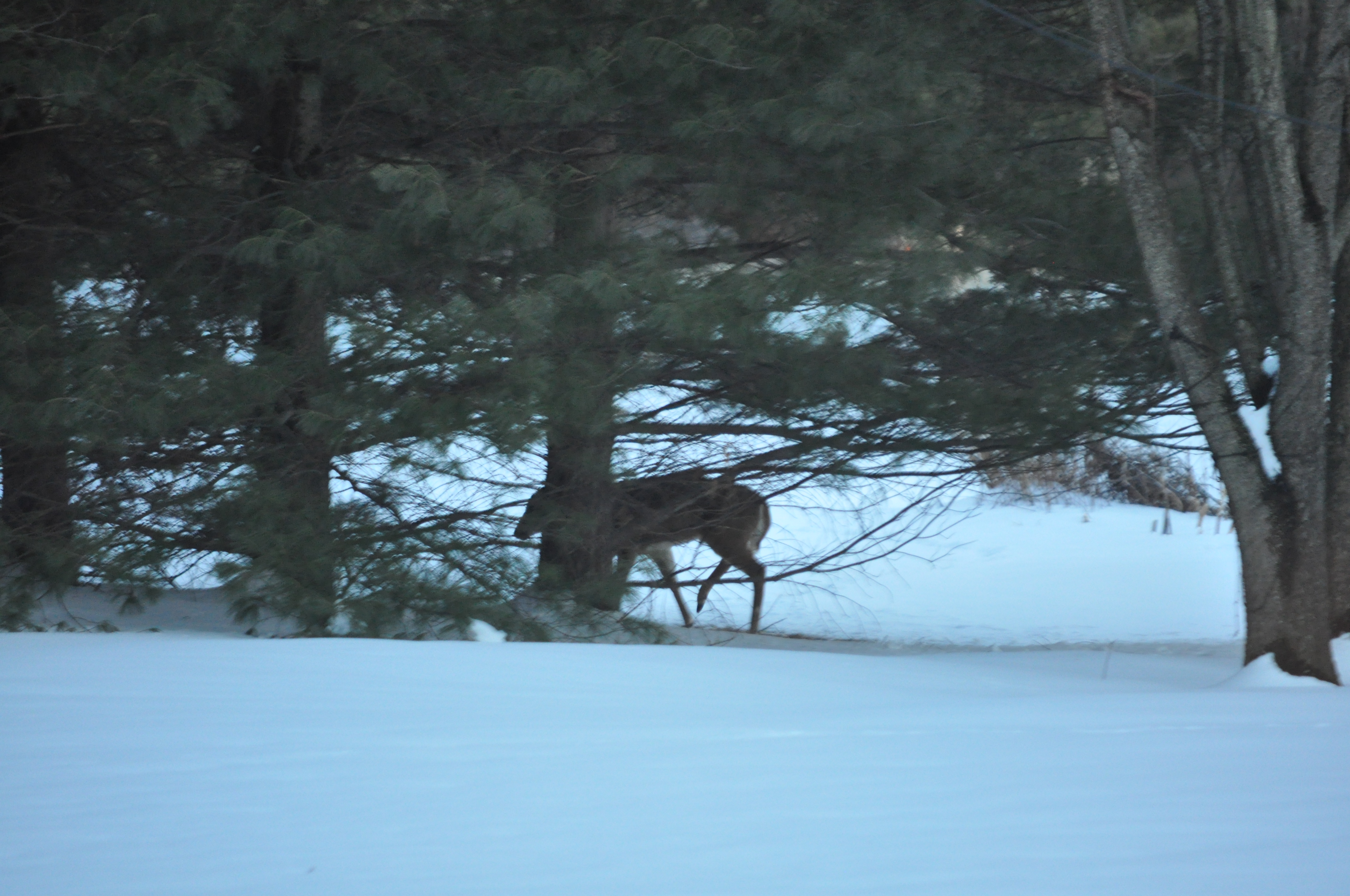 snow. deer and cooking 035