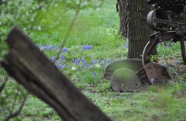 spring flowers 046