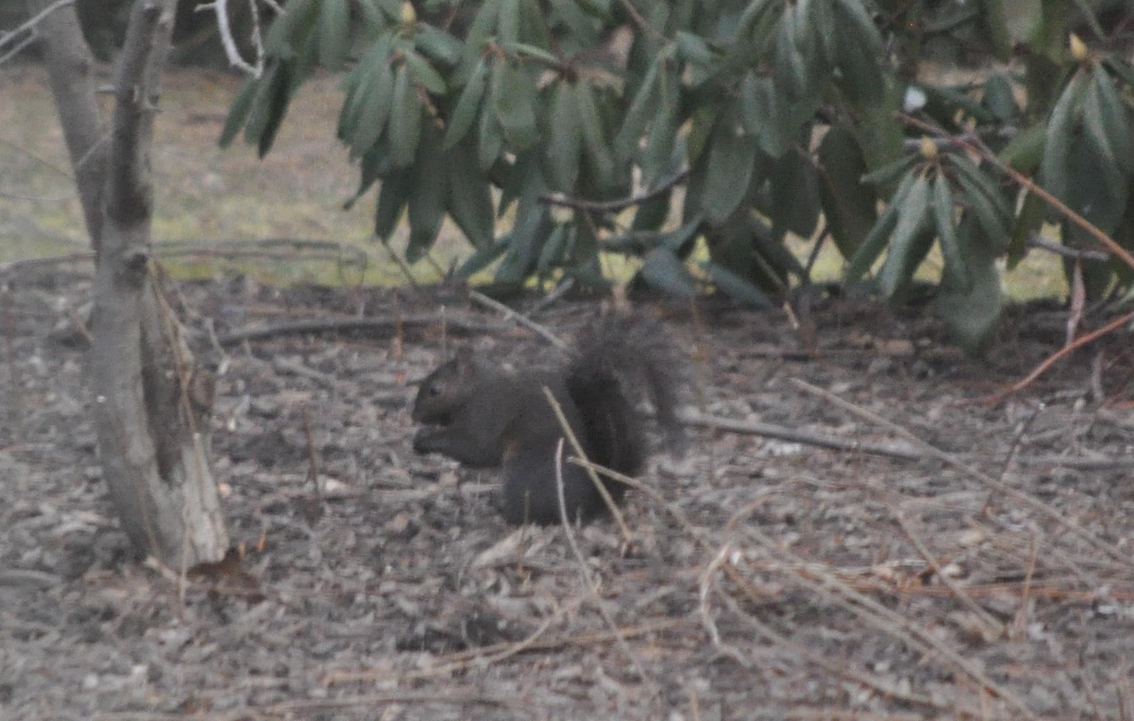 cooking, birds and squirrel, attic 008