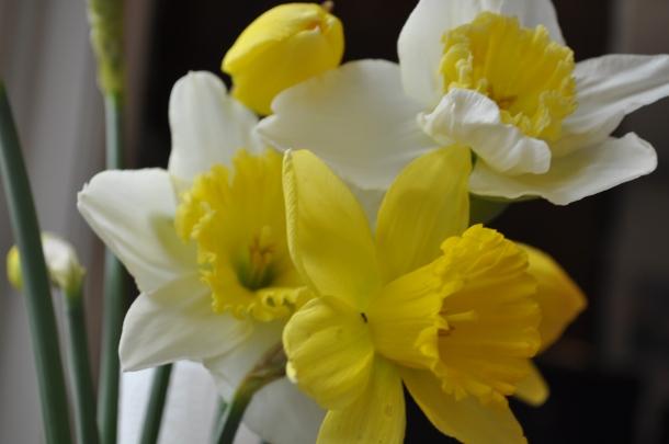 first day spring renov 043