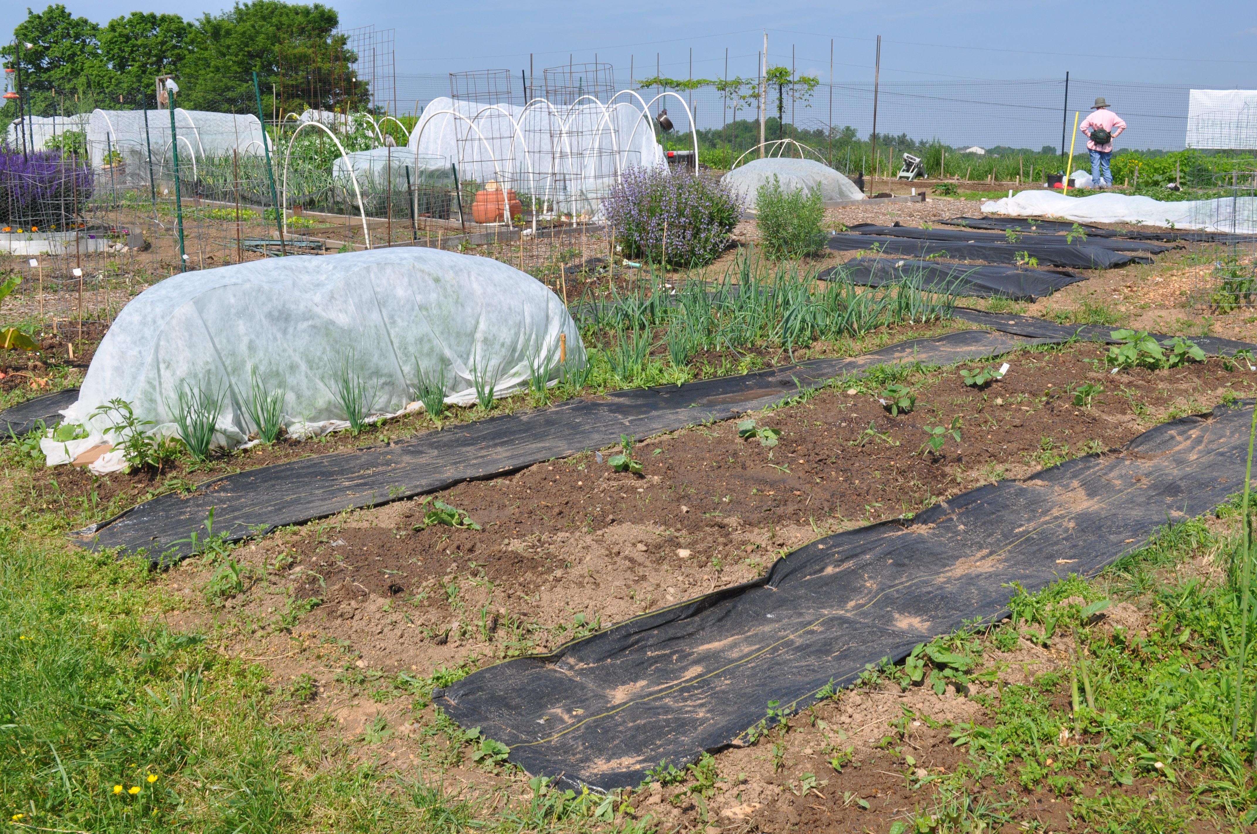 the garden 005