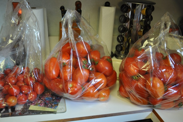 tomatoes-csa-and-deck-002