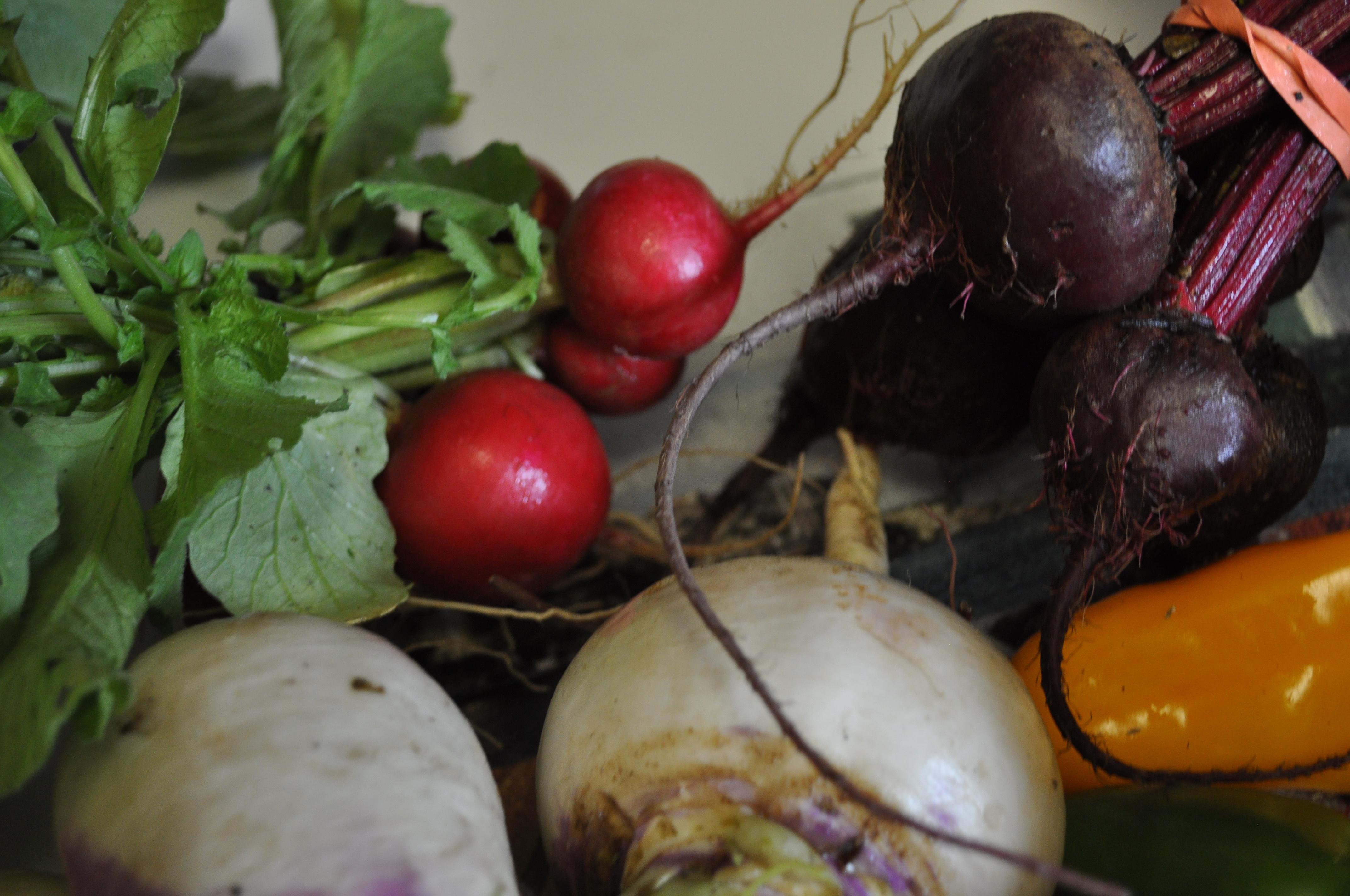 csa-and-more-interesting-veggies-022
