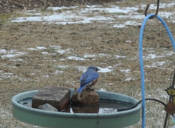 attic pics, meat and birds 093